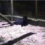 melaka-zoo-night-safari-10
