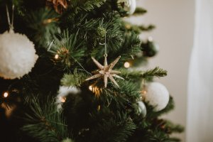 Costco is known for selling just about everything but, Does Costco Sell Christmas Trees as well? Keep reading and we'll answer all your questions such as; How much are Christmas Trees at Costco? Does Costco Sell Live Christmas Trees? What Type of Christmas Tree Does Costco Sell?