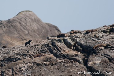 Seals at Doubtful Sound