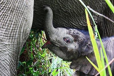 elephantconservationcenter03
