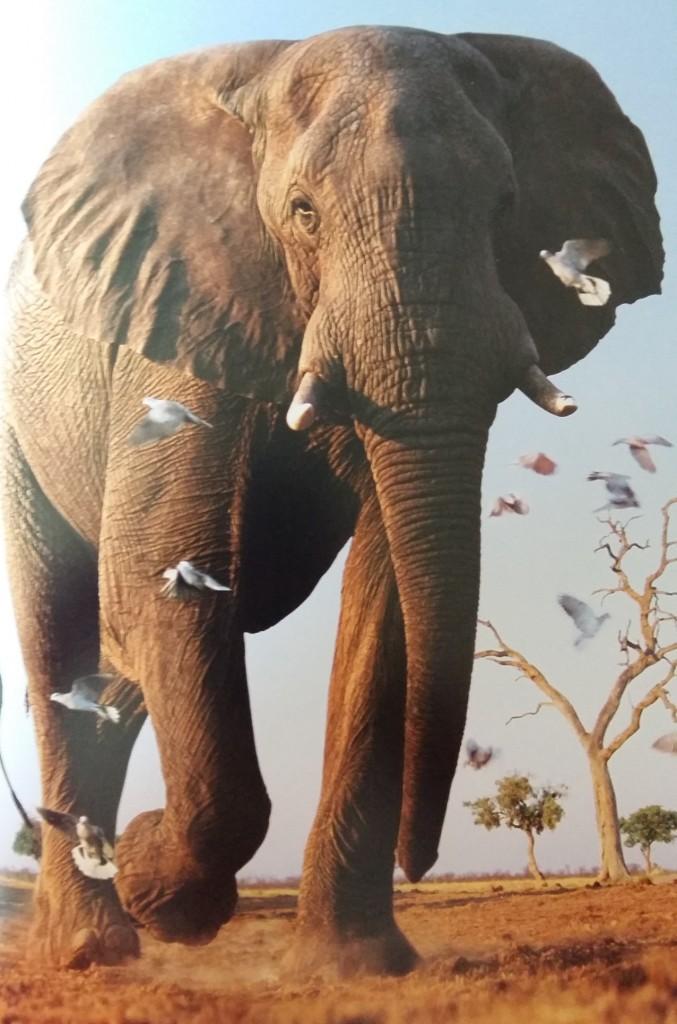 elephants2-worldkids