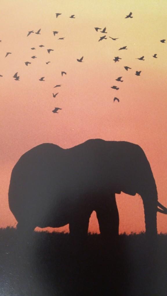 elephants4-worldkids