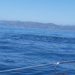 DOLPHIN & WHALE WATCHING  IN SOUTHERN CALIFORNIA