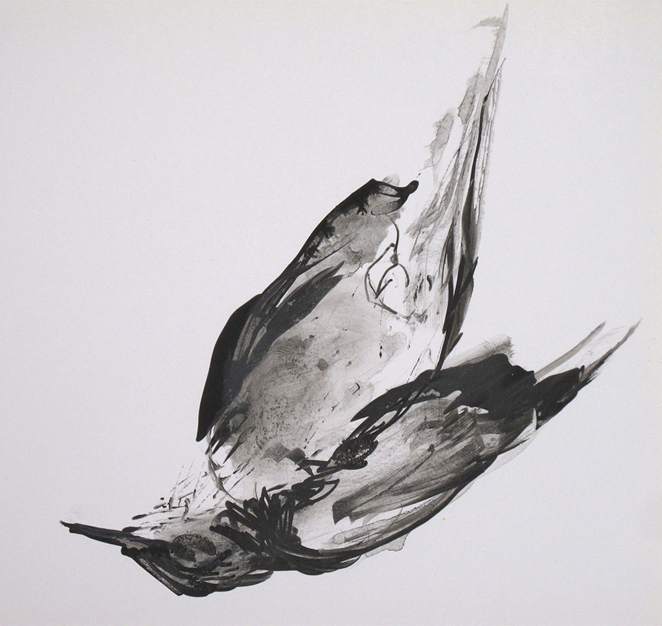 Black and white bird drawing by Isis Olivier