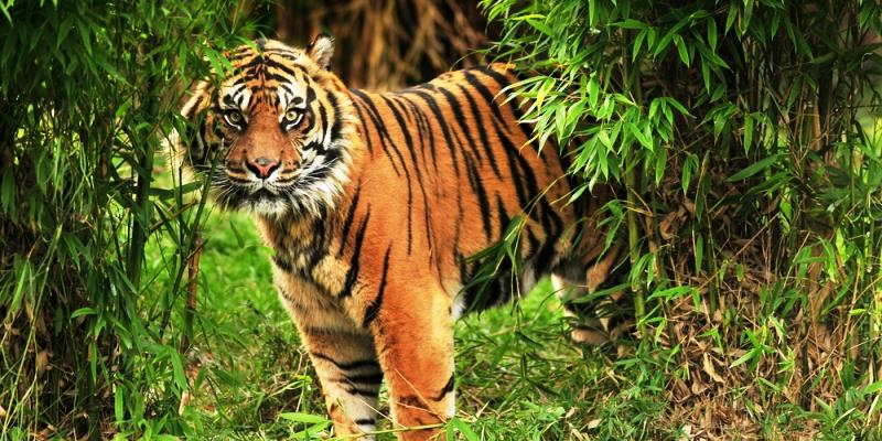 Why People Choose Sundarban As Best Tourist Destination?