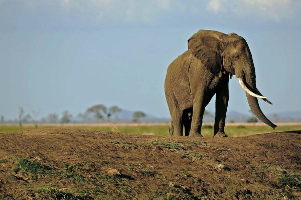 Hombre intentó entrar en el corral de elefantes del zoológico para 'impresionar a su hija'
