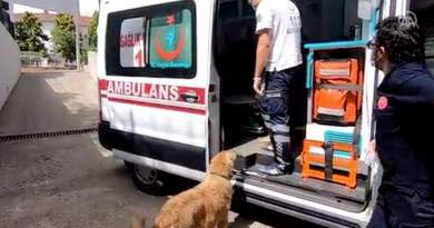 Perro leal persigue ambulancia que lleva al dueño enfermo al hospital