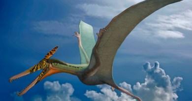 Descubierto fósil de 'dragón volador' en el desierto de Chile