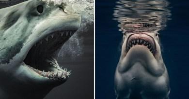 Las asombrosas fotos de tiburones dan una rara mirada de cerca