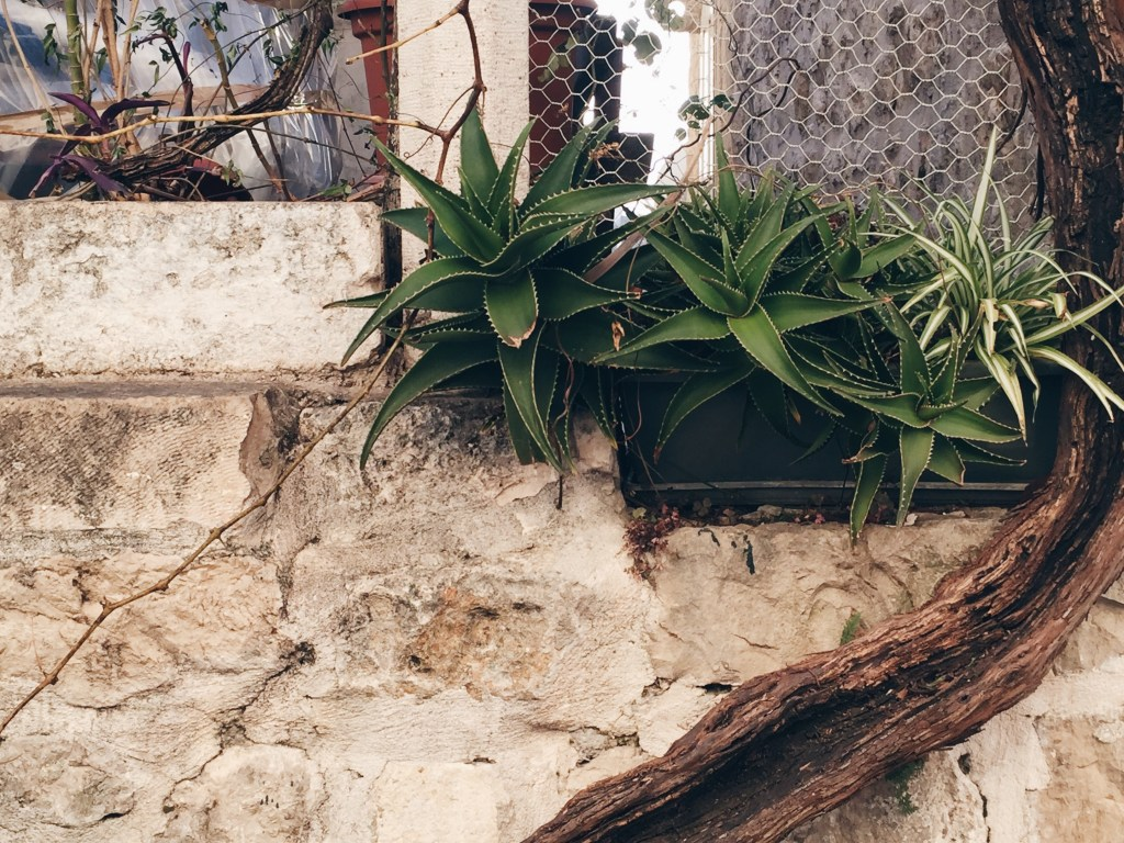 Winter in Dubrovnik: Should You Visit?