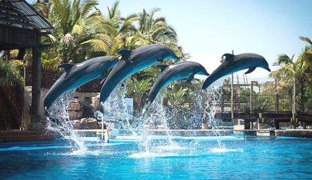 Gambit the Dolphin - uShaka Marine World