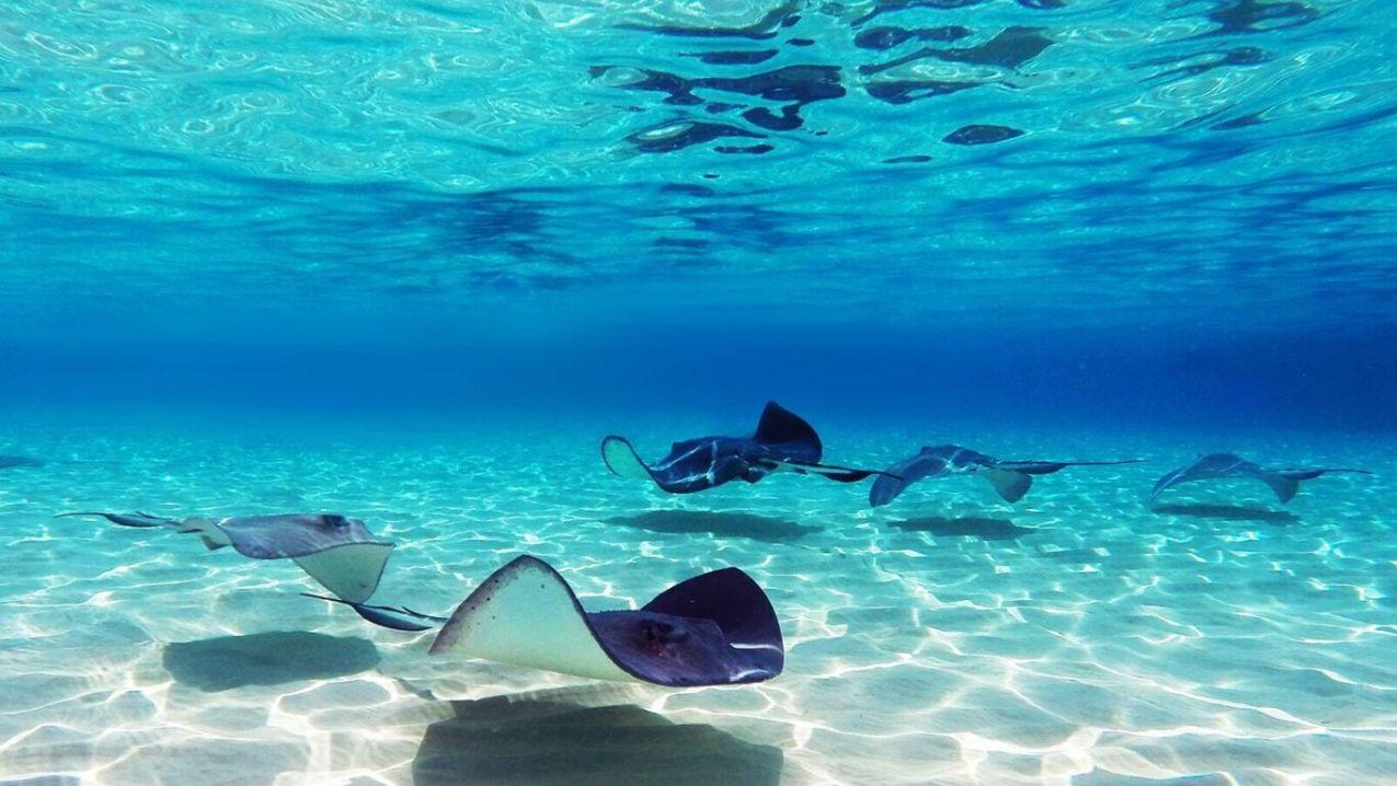 Cayman islands diving min