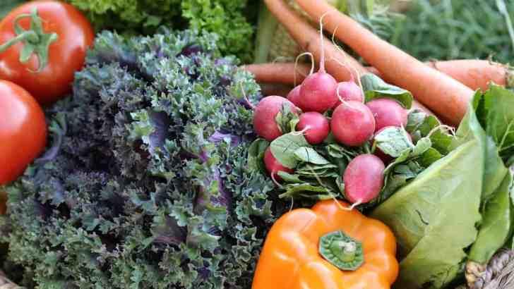 Ten Steps Toward a Vegan Lifestyle