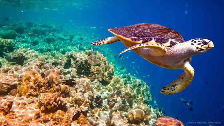 Seafood's Dark Secret: Killing Turtles, Whales & Other Marine Animals