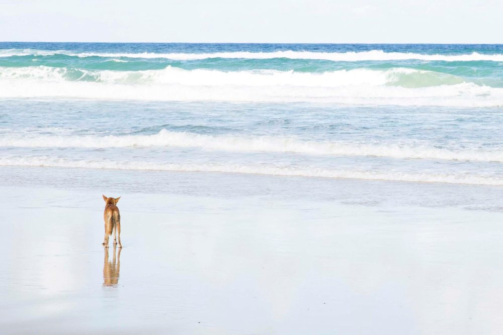 Fraser_Island_Australia
