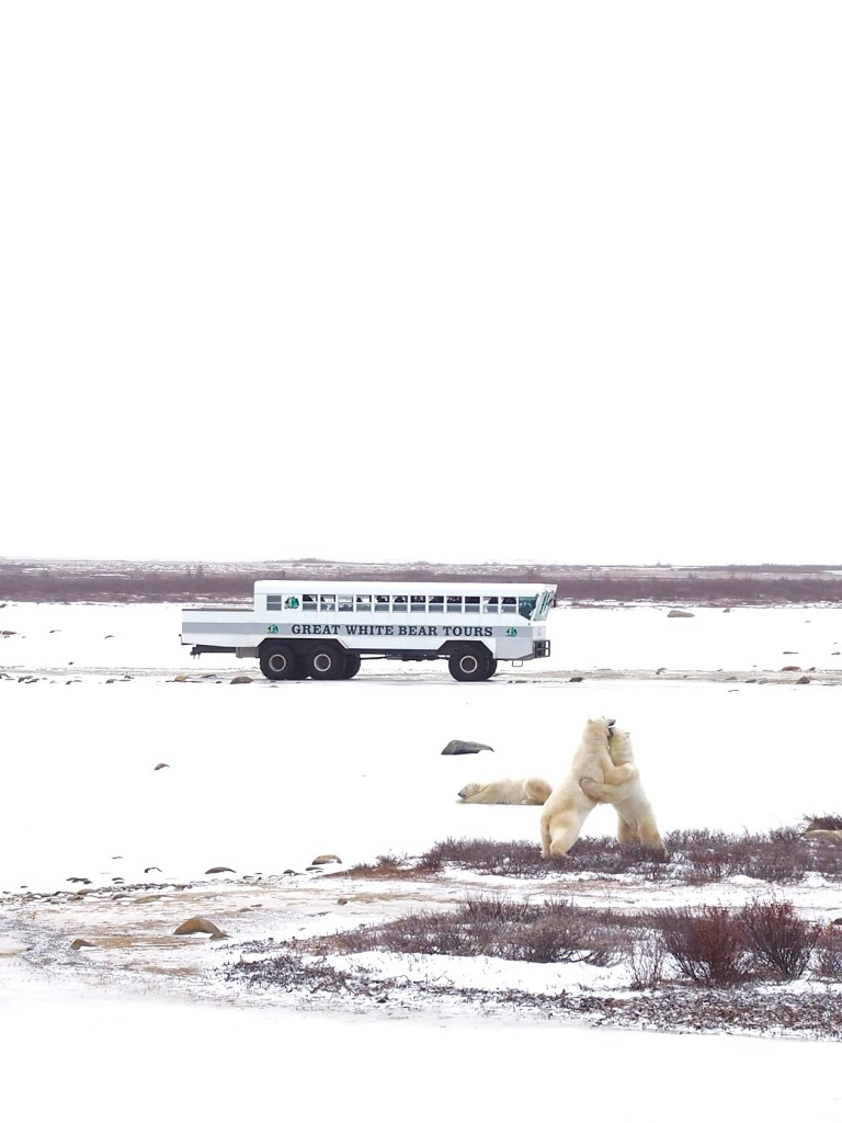 Polar_Bear_Capital_of_the_World