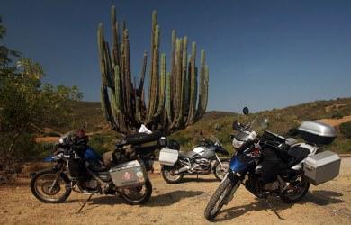 Cactus Bikes