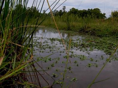Campo Irrigation