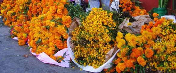 Dias Flowers
