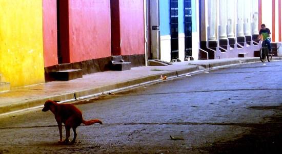 Doggy Do Granada