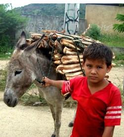 Donkey Boy Nicaragua