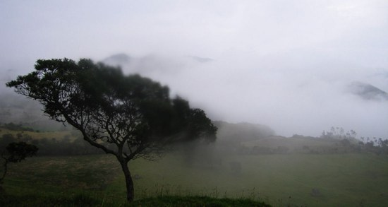 Ecuador Highlands Fog