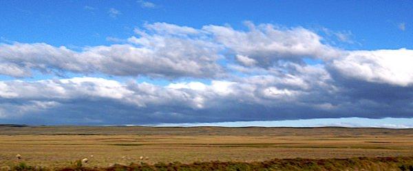 Golden Patagonian Nothing