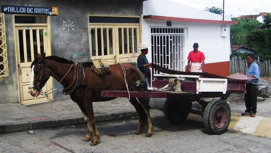 Horse Carriage Colombia