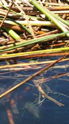 Island Reeds Water