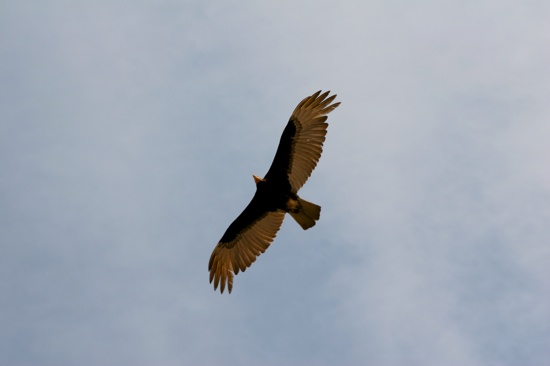 Itaunas Bird