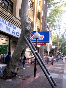 Mendoza Avetrees