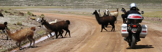 Miah Llamas2