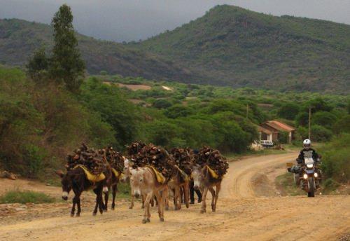 Mules Apart Vallegrande-2