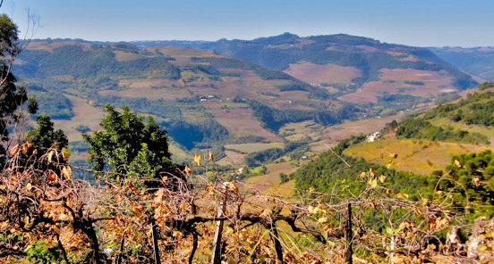 Vista Brazil Wine Region