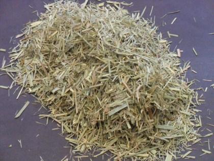 Cymbopogon Citratus (West Indian Lemon Grass)