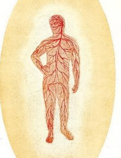 Etheric Body, from Man Visible and Invisible, by C.W. Leadbeater