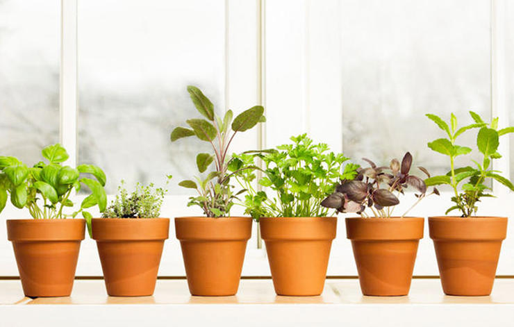 Herb Garden at Home – Live the Organic Life