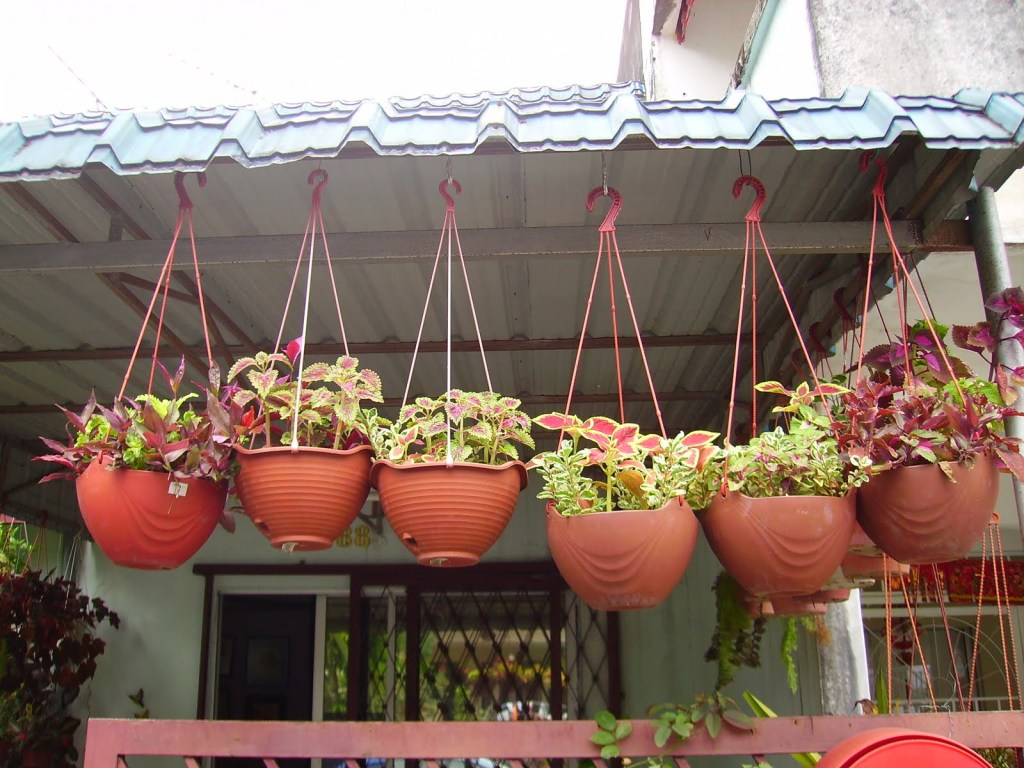how to plant Vegetable Garden