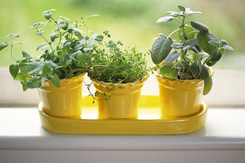 Leisure time - Indoor Gardening