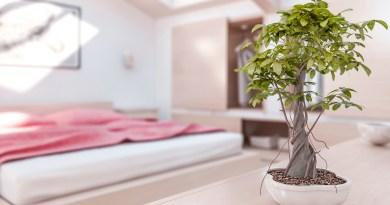 Indoor Plants Help You Sleep Better