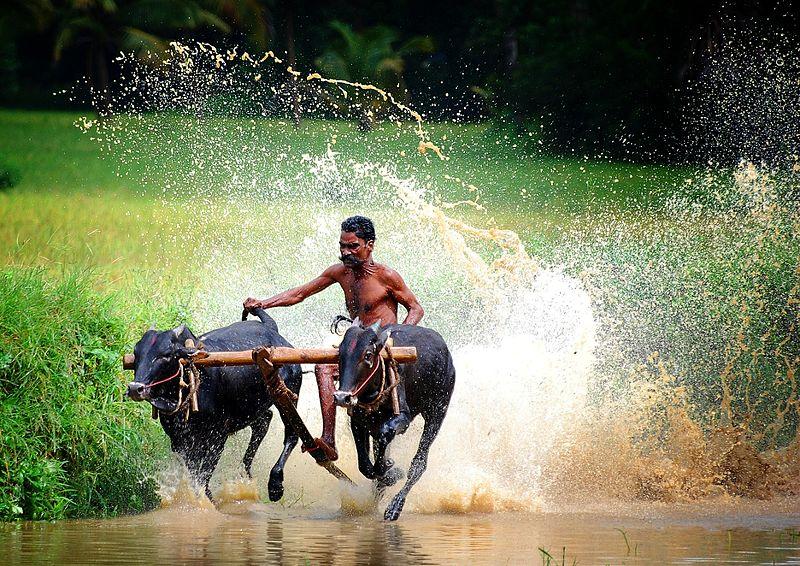 Unique and Unreal Indian Villages
