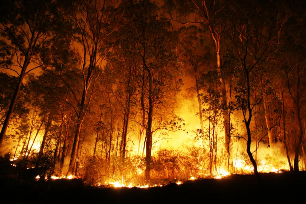 wildfires also leads to global warming and climate change
