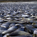 Do You know the Mystery behind Countless Dead Fish on Long Island?