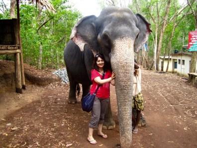 Elephants are my favourite animals