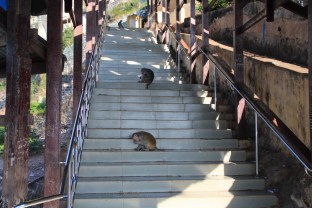The little monsters on the way up to the mountain