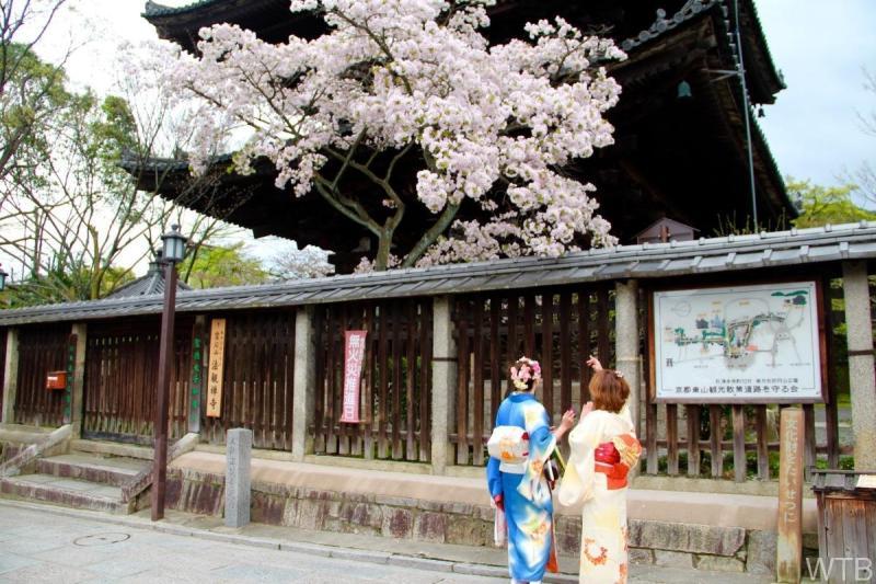 Sakura-28