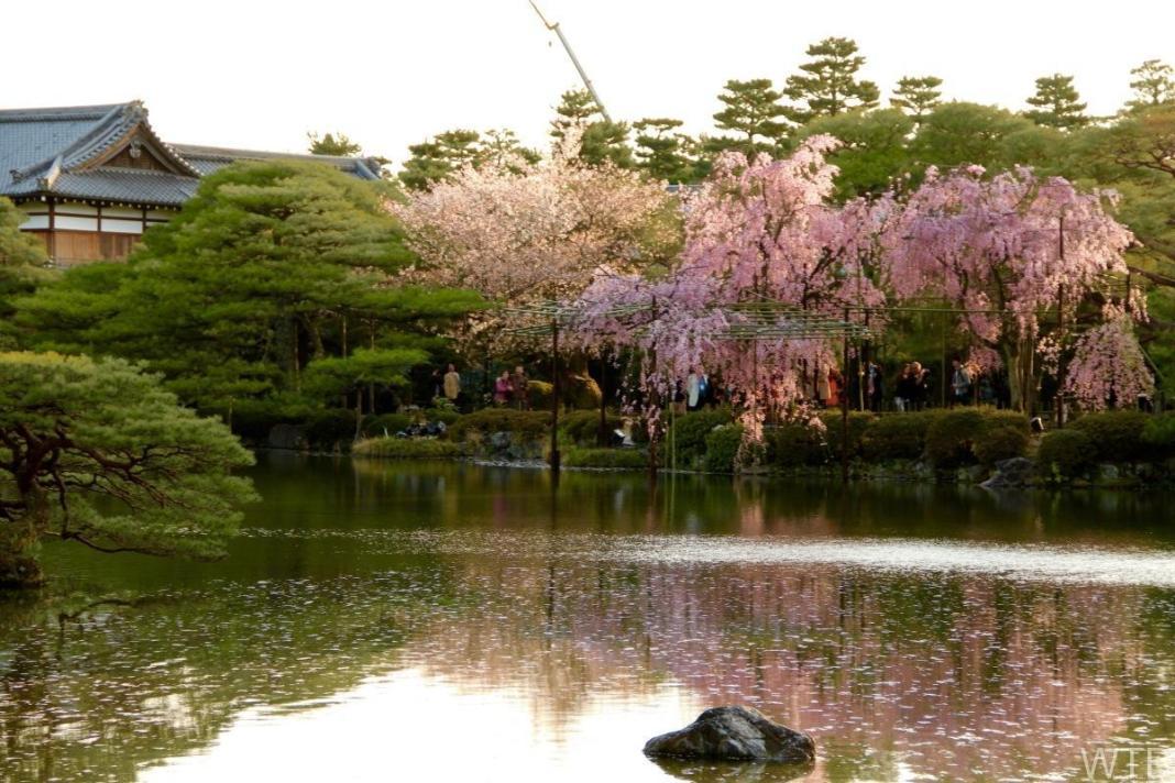 Sakura-40