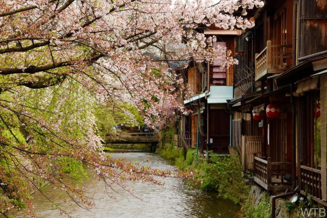 Sakura-45