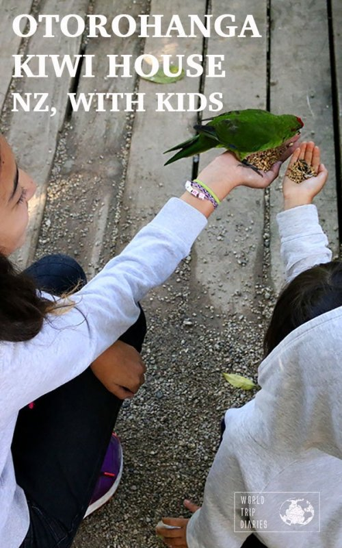 Have you ever wanted to see a kiwi bird in action? Otorohanga Kiwi House offers that and a lot more!