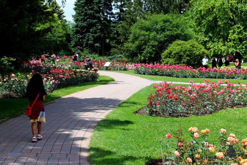 The Botanic Gardens is incredibly beautiful and it offers endless fun for all ages